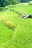 Rice terraces near Bamei Village (1). Vibrant green rice terraces near Bamei Village (1 Stock Photos