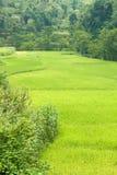 Rice terraces near Bamei Village (2). Vibrant green rice terraces near Bamei Village (2 Royalty Free Stock Photo