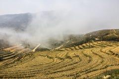 Rice terraces near Sapa Royalty Free Stock Image