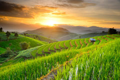 Rice Terraces in Northern of Thailand Royalty Free Stock Photos