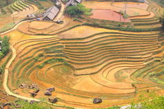 Rice terraces, paddi fields in mountains. Rice terraces are usually set into mountainsides at high altitudes where humidity is best.lovely tranquil settings of Stock Images