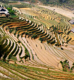 ,rice terraces,paddi fields, Stock Image