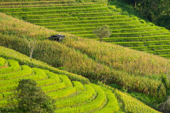 Rice terraces pattern in Chiang Mai, Thailand Stock Images