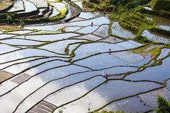 Rice Terraces, Philippine. Stock Image