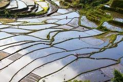 Rice Terraces, Philippine. Stock Image