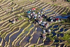 Rice Terraces, Philippine. Stock Images