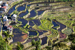 Rice Terraces, Philippine. Stock Photo