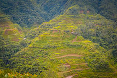 Rice terraces in Philippines Stock Image
