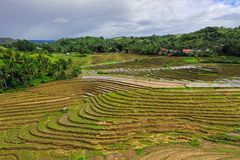Rice terraces in the Philippines. Rice cultivation in the North of the Philippines, Batad, Banaue.  stock photography
