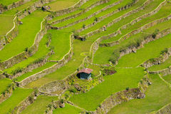 Rice terraces in the Philippines.  Rice cultivation in the North Royalty Free Stock Photos