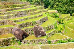 Rice terraces in the Philippines. Rice cultivation in the North Stock Image
