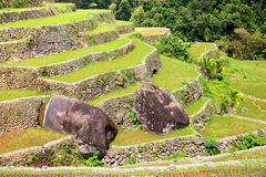 Rice terraces in the Philippines. Rice cultivation in the North Royalty Free Stock Photography