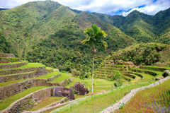 Rice terraces in the Philippines. Rice cultivation in the North Stock Photography