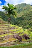 Rice terraces in the Philippines. Rice cultivation in the North Royalty Free Stock Image
