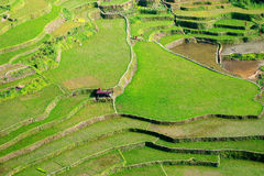 Rice terraces in the Philippines. Rice cultivation in the North Stock Photos