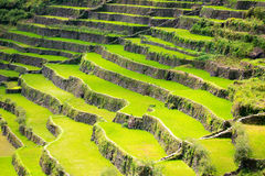 Rice terraces in the Philippines. Rice cultivation in the North Royalty Free Stock Images