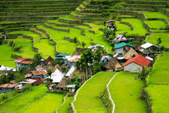 Rice terraces in the Philippines. The village is in a valley amo Stock Photos