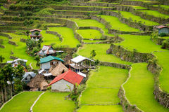 Rice terraces in the Philippines. The village is in a valley amo Royalty Free Stock Photos