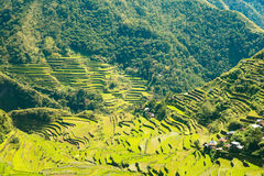 Rice terraces in the Philippines. The village is in a valley amo Stock Image