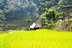 Rice terraces in the Philippines. The village is in a valley amo Royalty Free Stock Photography