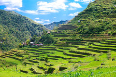 Rice terraces in the Philippines. The village is in a valley amo Stock Photo