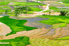 Rice terraces at planting season. Ethnic farmers grow rice on terraces on mountains, making very nice landscape.nLocation: Mu Cang Chai, Vietnam Stock Photography