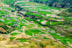Rice terraces at planting season. Ethnic farmers grow rice on terraces on mountains, making very nice landscape.nLocation: Mu Cang Chai, Vietnam Stock Photos