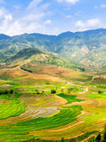 Rice terraces at planting season. Ethnic farmers making use of the natural water from high mountains to fill their terraces. Location: Mu Cang Chai, Vietnam Royalty Free Stock Photography
