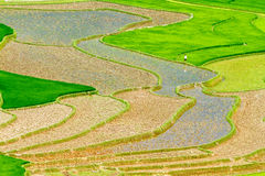 Rice terraces at planting season. Ethnic farmers making use of the natural water from high mountains to fill their terraces. Location: Mu Cang Chai, Vietnam Stock Photo