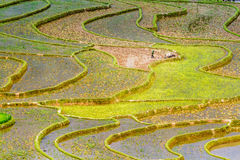 Rice terraces at planting season. Ethnic farmers making use of the natural water from high mountains to fill their terraces. Location: Mu Cang Chai, Vietnam Stock Image