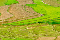 Rice terraces at planting season. Ethnic farmers making use of the natural water from high mountains to fill their terraces. Location: Mu Cang Chai, Vietnam Stock Photography