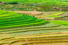 Rice terraces at planting season. Ethnic farmers making use of the natural water from high mountains to fill their terraces. Location: Mu Cang Chai, Vietnam Stock Photos