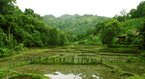 Rice terraces in rain season Royalty Free Stock Photography