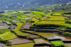 Rice-terraces of Sagada Royalty Free Stock Images