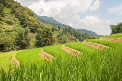Rice Terraces in Sapa Royalty Free Stock Images