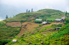 Rice Terraces in Sapa, Lao Cai, Vietnam Stock Photos