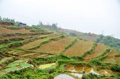 Rice Terraces in Sapa, Lao Cai, Vietnam Royalty Free Stock Image