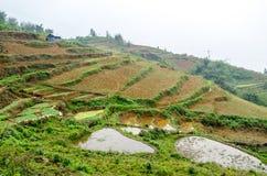 Rice Terraces in Sapa, Lao Cai, Vietnam Stock Image