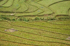 Rice terraces in Sapa, Northern Vietnam Royalty Free Stock Image