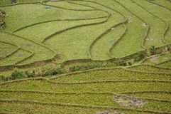 Rice terraces in Sapa, Northern Vietnam Stock Photo
