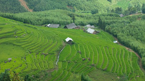 Rice terraces in Sapa Valley, Vietnam Royalty Free Stock Images