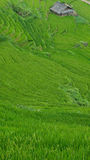 Rice terraces in Sapa Valley, Vietnam Royalty Free Stock Photos