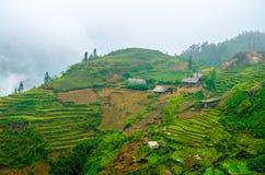 Rice terraces in Sapa, Vietnam Stock Photography