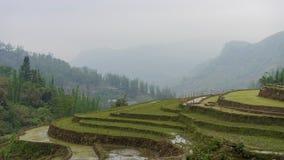 Rice Terraces In Sapa. Vietnam stock photo