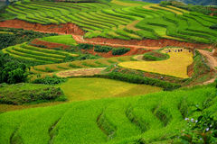 RICE TERRACES IN SAPA, VIETNAM Royalty Free Stock Photo