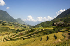 Rice Terraces on the side of a valley. This photo is from Sapa, Vietnam.  The terraces are used to grow rice.  The golden colour shows that it's harvest time Stock Photo