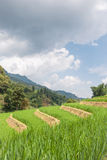 Rice Terraces and Sky Royalty Free Stock Image