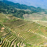 Rice terraces in spring Royalty Free Stock Photography