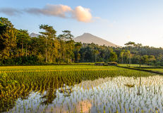 Rice Terraces at sunrise Royalty Free Stock Photography