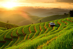 Rice Terraces with sunset backdrop at Ban Papongpieng Chiangmai. Lannscape of Rice Terraces with sunset backdrop at Ban Papongpieng Chiangmai Thailand stock photography